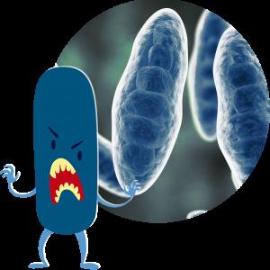 choroby intymne - Grzybica, drożdżyca, kandydoza